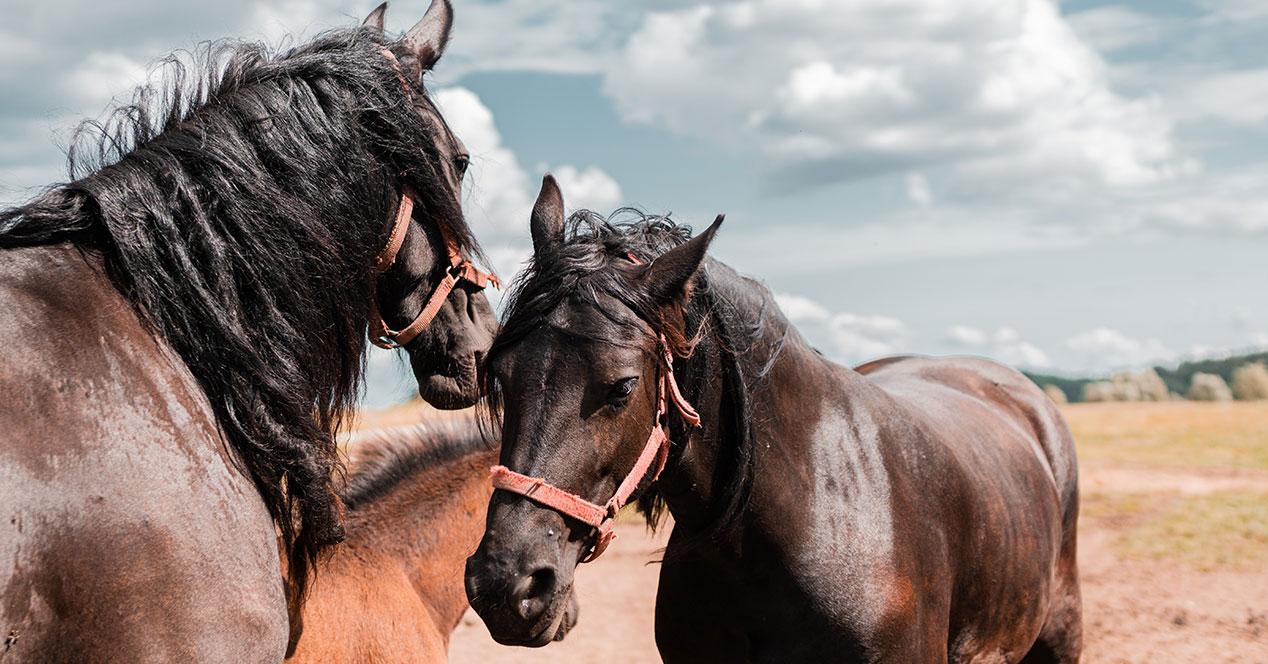 Juegos de caballos